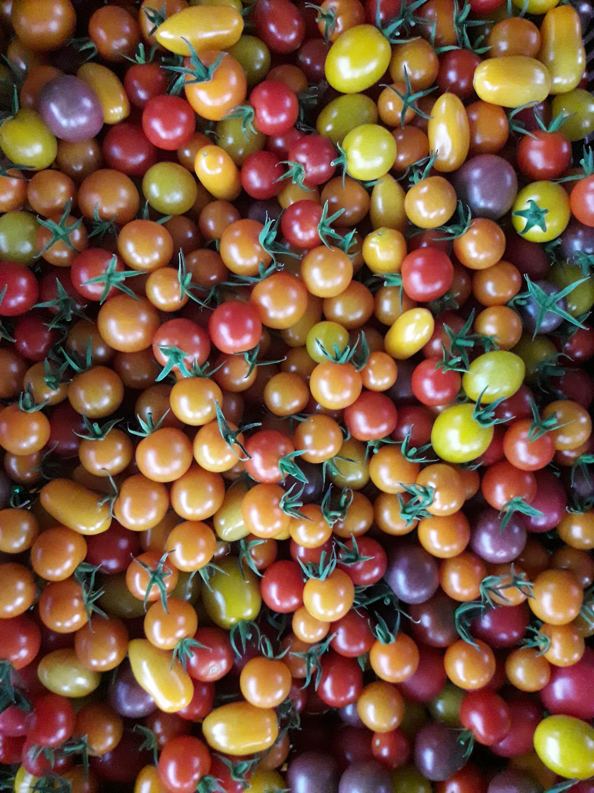 Neudlhof - Tomaten