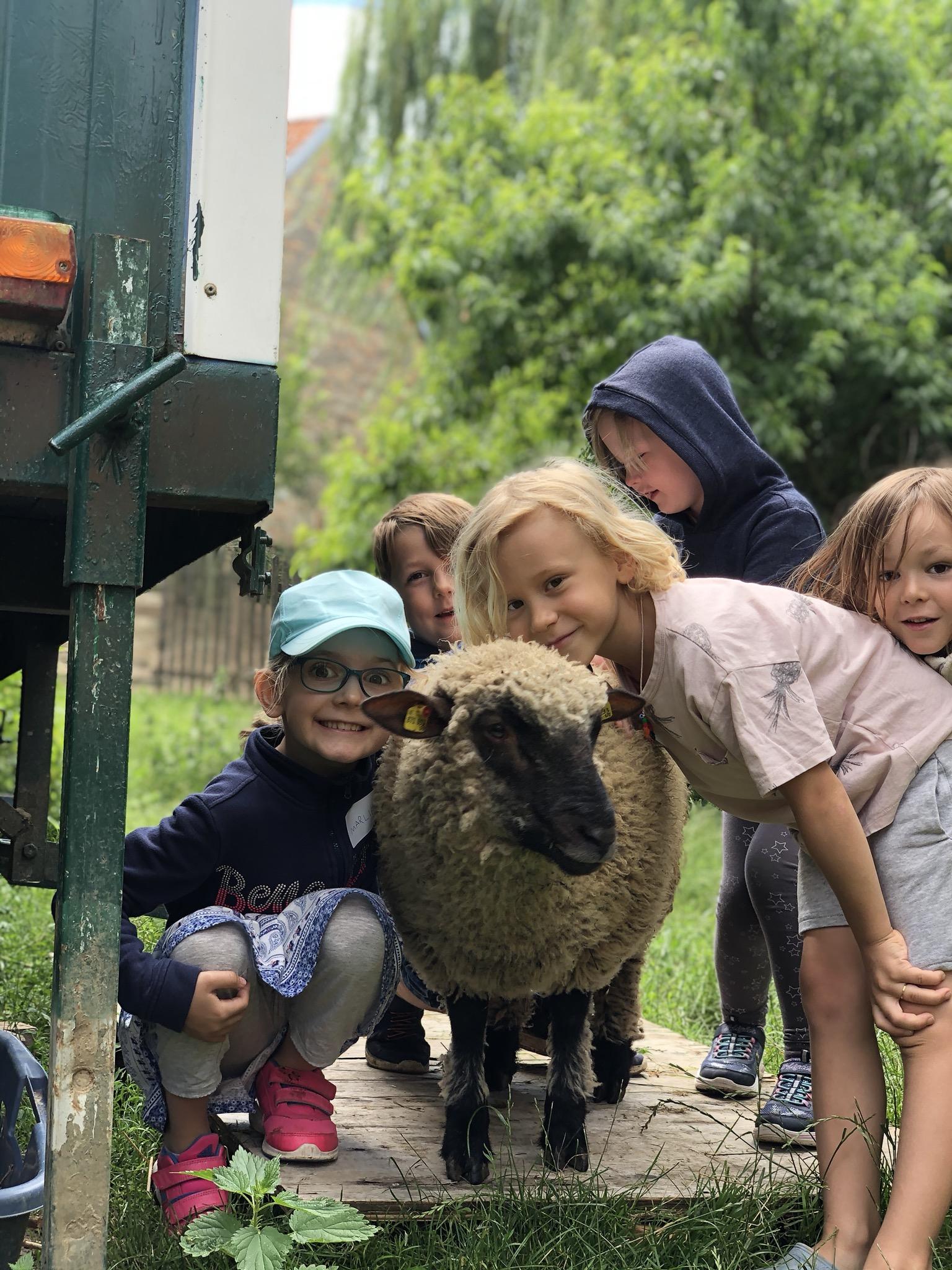 Neudlhof - Schaf & Kids